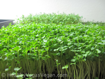 How to Grow Microgreens, Sprouts, Veggies, & Herbs in Small Spaces
