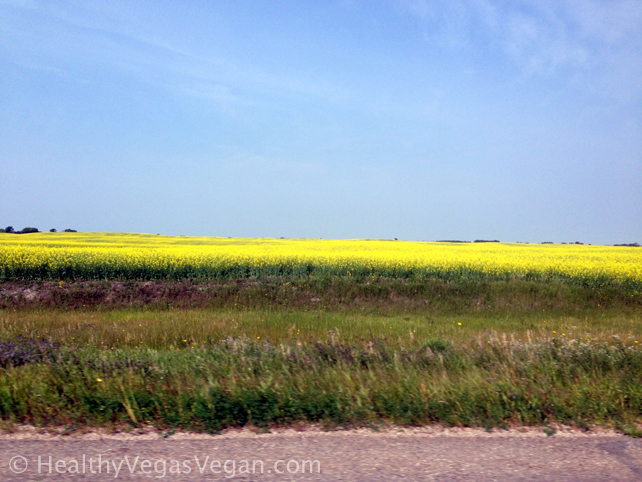 Eating Clean with Family in Saskatchewan: Road Trip Days 9-12