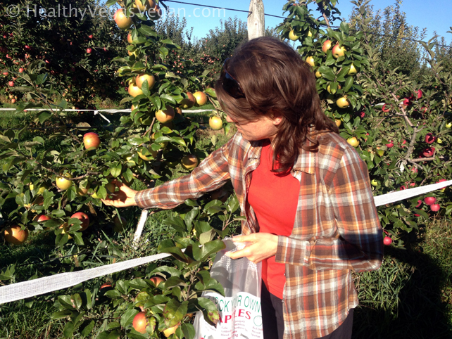 Pick your own apples 3